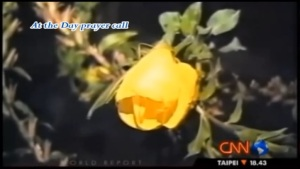 Screenshoot video bunga yang sedang mekar ketika terdengar azan
