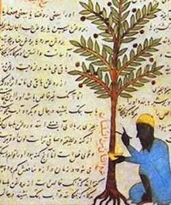 Kitab tentang pertanian karya Ibnu al Awwam, Kitab Al-Filaha
