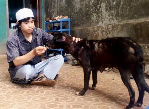 Ust. Abdul Wahab sedang memberi makan anjing